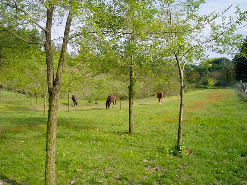 Sasil Srl Ripristini ambientali - Parco Aurora